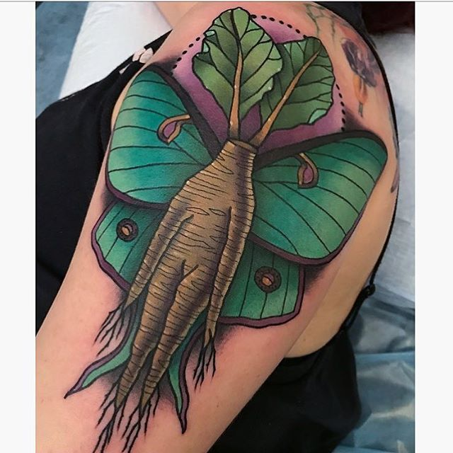 Mandrake Luna Moth done by @jasmineworthtattoos at #remingtontattoo #mandraketattoo #mandrake #mothtattoo #moth #lunamothtattoo #lunamoth #sandiegotattooartist #northparktattooartist #sandiego #northpark